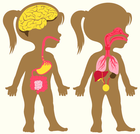 Vector illustration for children. Flat cartoon style. Silhouette depicting the human digestive and respiratory system. Stomach, intestines, liver, nasopharynx, trachea, lungs Ilustração