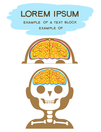 Vector illustration Flat cartoon style. The head of a person with the image of the skull, brain, membranes and blood vessels on it.