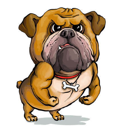 Vector illustration. Funny cartoon. A parody portrait of a stern English Bulldog showing off his muscles. Illustration