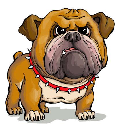 Vector illustration. Funny cartoon. A parody portrait of a cute but stern English Bulldog.
