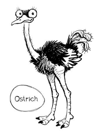 Vector. Graphic black and white sketch of a funny ostrich with an egg.