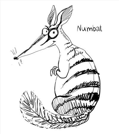 Vector. Graphic black and white sketch of a funny numbat. Illustration