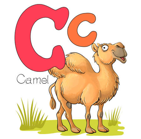 Vector illustration. Alphabet with animals. Large capital letter C with a picture of a bright cute camel