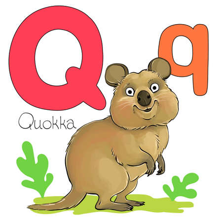 Vector illustration. Alphabet with animals. Large capital letter Q with a picture of a bright cute quokka.