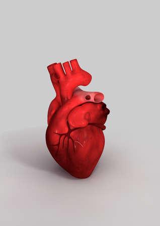 heart muscle cells: Human heart - 3D render Stock Photo