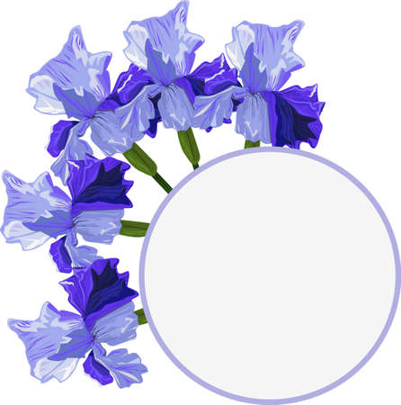 Blue iris on a white background