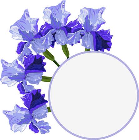 Blue iris on a white background