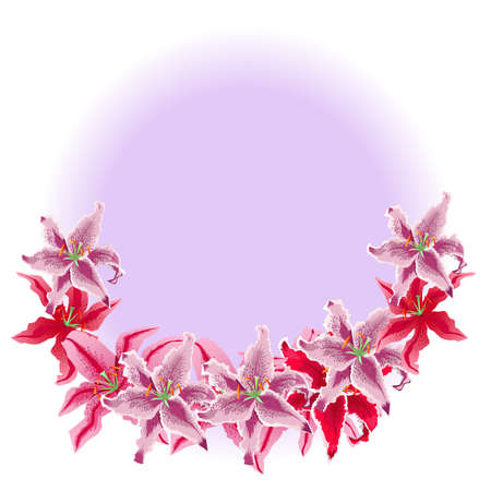 Colored vector illustration.  Beautiful bouquet of white and pink lilies on white background