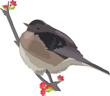bird on branch with flowers illustration on white background.