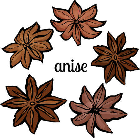 anise isolated on white background Vector illustration.