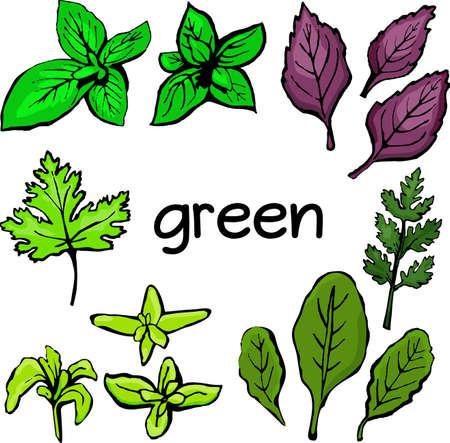 Salad greens isolated on white background Ilustracja