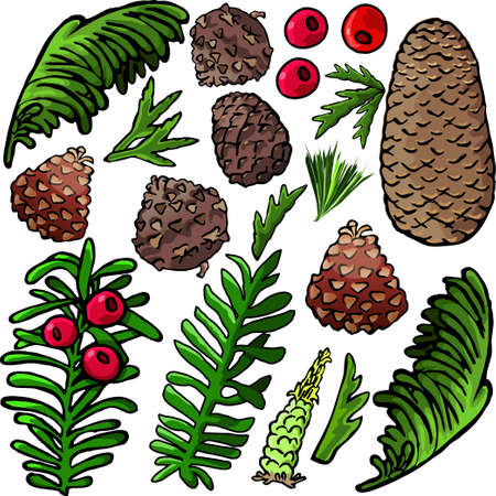 Pine cone and plants images