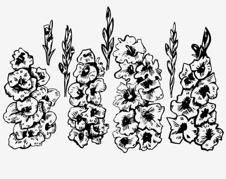 ink graphics gladiolus on white background Standard-Bild - 102251339