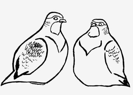 hand graphics partridge isolated on white background Illustration