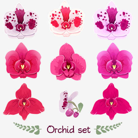 Collection of white orchids and green leaves. Vector illustration. Stock Illustratie
