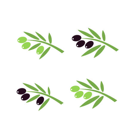 Vector olive branchs with olives