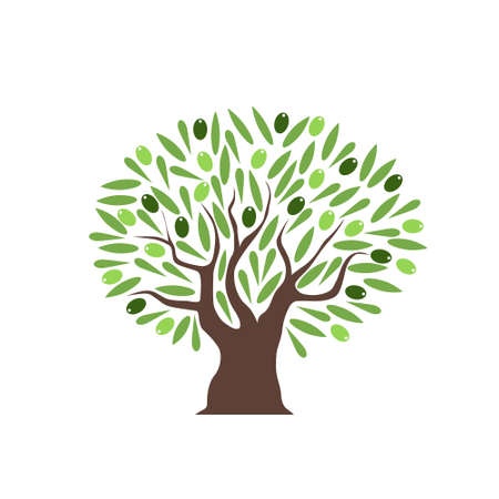Vector olive tree with green olives