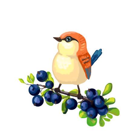 Orange bird sitting on a branch with blueberry