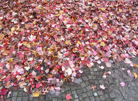 Autumn in Europe. Red fallen autumn leaves lie on the pavement. Top view of the colorful leaves of trees. Zdjęcie Seryjne