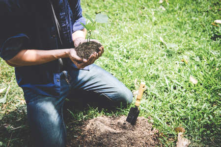 Planting a tree, Two hands of young man were planting the seedlings and tree growing into soil while working in the garden as save the world, earth day, nature, environment and ecology concept.