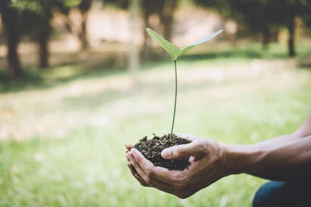 Hands of young man reforesting were planting the seedlings and tree growing into soil while working in the garden as save the world, earth day, world environment day and ecology concept. Stock Photo