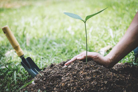 Planting a tree, Hands of young man were planting the seedlings and tree growing into soil while working in the garden as save the world, earth day, nature, environment and ecology concept.