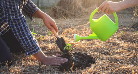 Hand of people helping plant the seedlings tree to preserve natural environment while working save world together, Earth day and Forest conservation concept. Archivio Fotografico