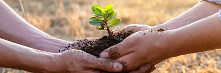Hand of people helping plant the seedlings tree to preserve natural environment while working save world together, Earth day and Forest conservation concept. Stock Photo