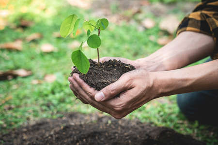 Man holding young sprout tree in two hands to protection new generation seedling to transplant into soil in the garden while reforestation for environment earth