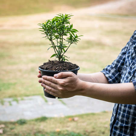 Man carrying young sprout tree in two hands and protection new generation seedling to preparing transplant into soil in the garden while reforestation for environment earth Standard-Bild