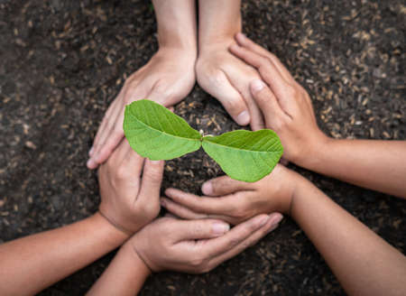 Hand of people protection new leaf of seedling in the soil and protect young plant to growing in the garden while reforestation to environment earth
