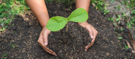 Man carrying a seedling in two hands and planting into the soil in the garden while reforestation for environment earth Standard-Bild