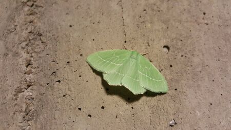 green butterfly Stock Photo
