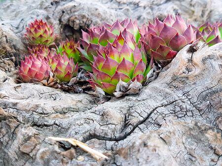 Portrait of succulent plants Stock Photo