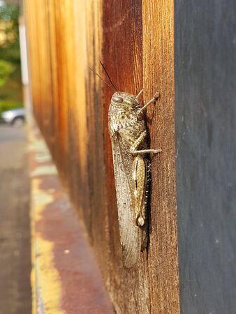 Grasshopper on wall