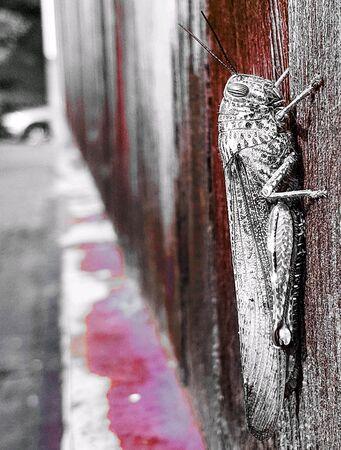 Grasshopper on a wood wall