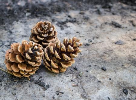 Three rustic pinecones