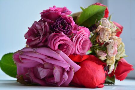 wilting: fleeting beauty of roses