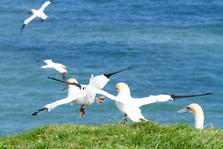 Sea birds taking off from a cliff