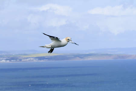 Sea bird flying in the sky Stock Photo