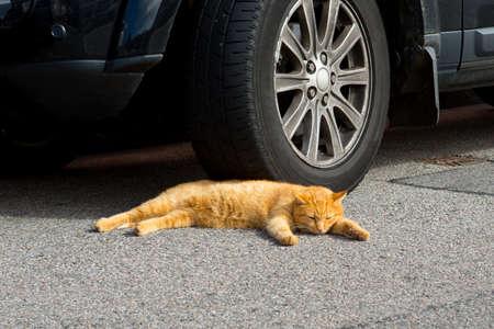 Cat asleep Stock Photo