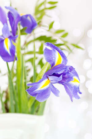 Iris Flowers in a vase photo