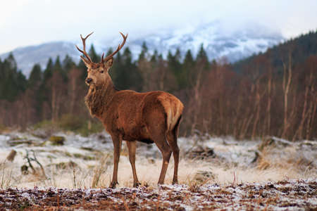 Reindeer standing in the forest photo