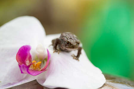 clambering: Frog on an orchid flower Stock Photo