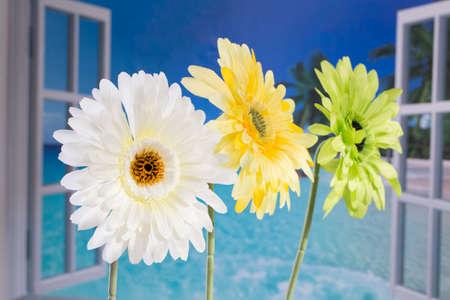 to open the window: Flores por la ventana abierta