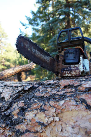 Chainsaw on a large log in the forest. Imagens