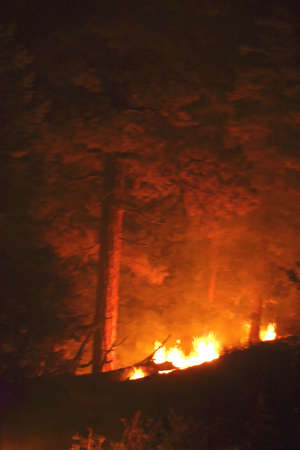Forest fire burning beneath tree during the night. Imagens