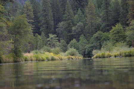 Gentle pool of water on a mountain creek.