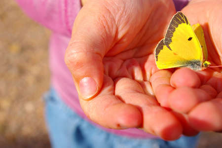 Small child holding a bright yellow butterfly. Stock Photo