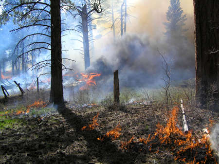 Large log smoking during a forest burn. Imagens - 2053070